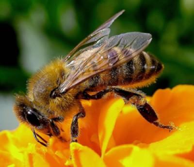 Lo zucchero e il miele (3° Parte)