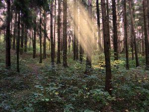 Immersione nei boschi: una terapia naturale