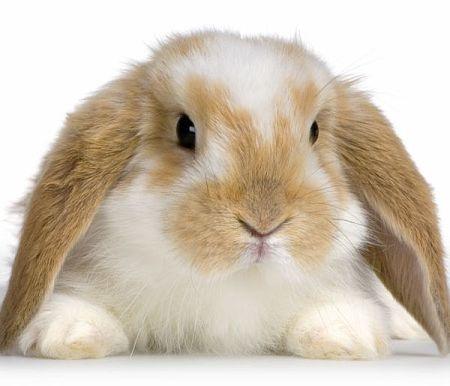 Vittoria Brambilla presenta la legge che vieta la carne di coniglio