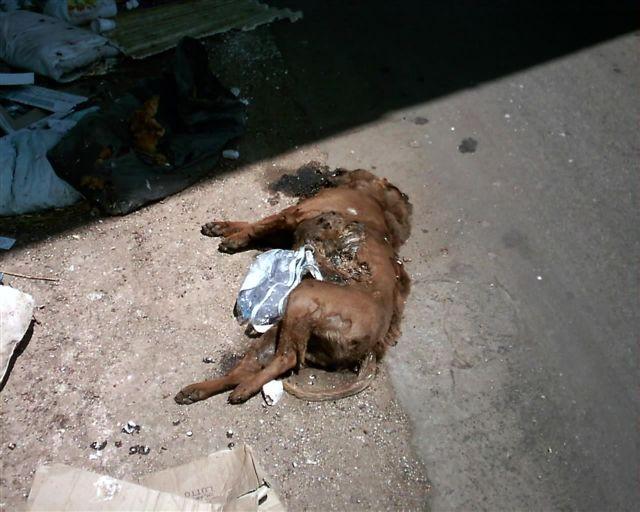 Lotta tra cani: una barbarie che tarda a finire