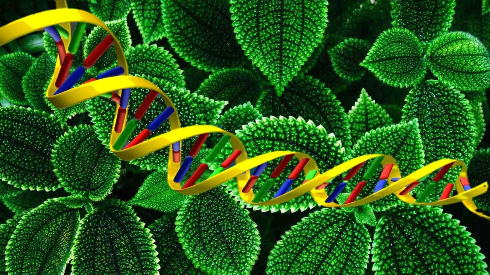 L'erosione genetica