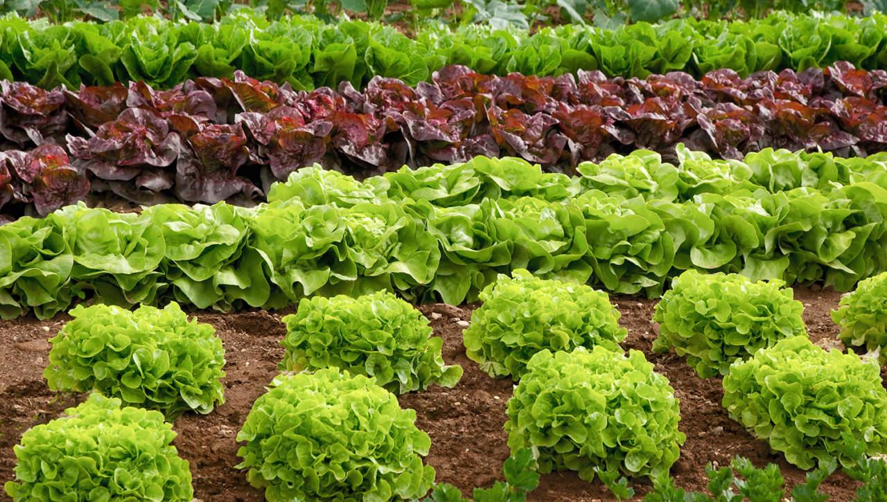 Le consociazioni nell'agricoltura moderna