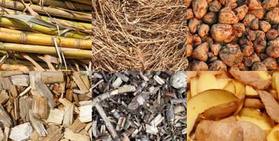 La biomassa