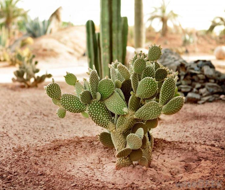 Quando innaffiare i cactus