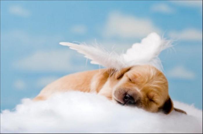 I cani hanno un'anima?