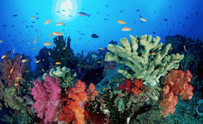 Qual è la più grande barriera corallina del mondo