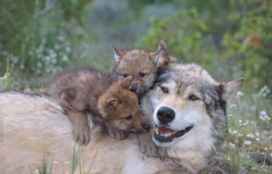 Il centro visita del lupo