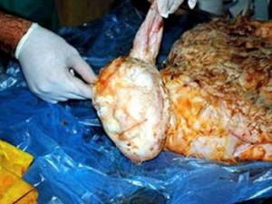 Una pecora in Turchia ha partorito agnello con il volto umano.