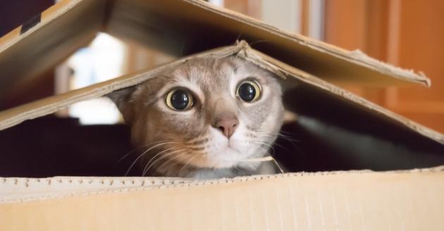 Gatti: predatori indefessi di piccoli animali selvatici