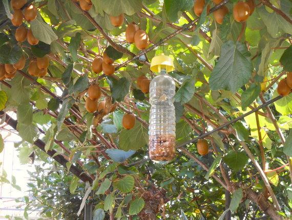 Trappole per mosche e zanzare
