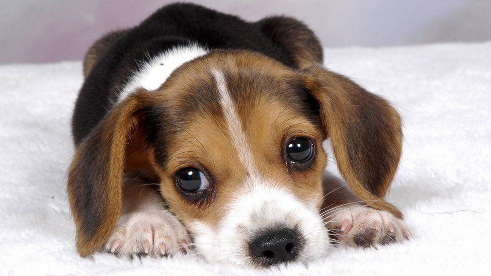 Che cane può mangiare con il parvovirus