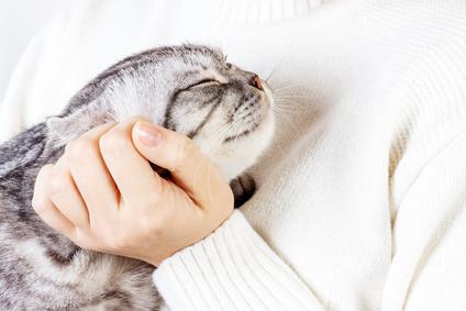 Cosa significa fare le fusa dei gatti?