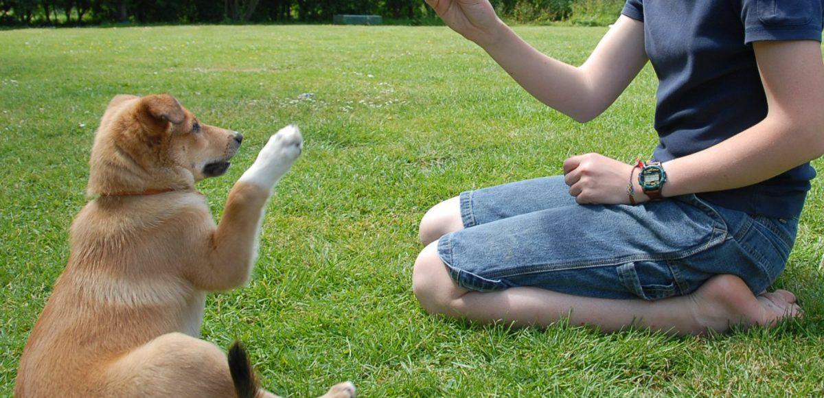 Quando iniziare a educare un cucciolo