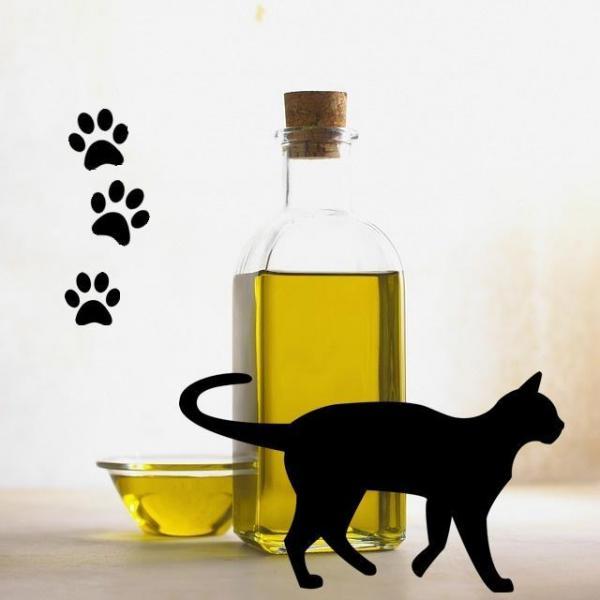 I gatti possono mangiare l'olio d'oliva?
