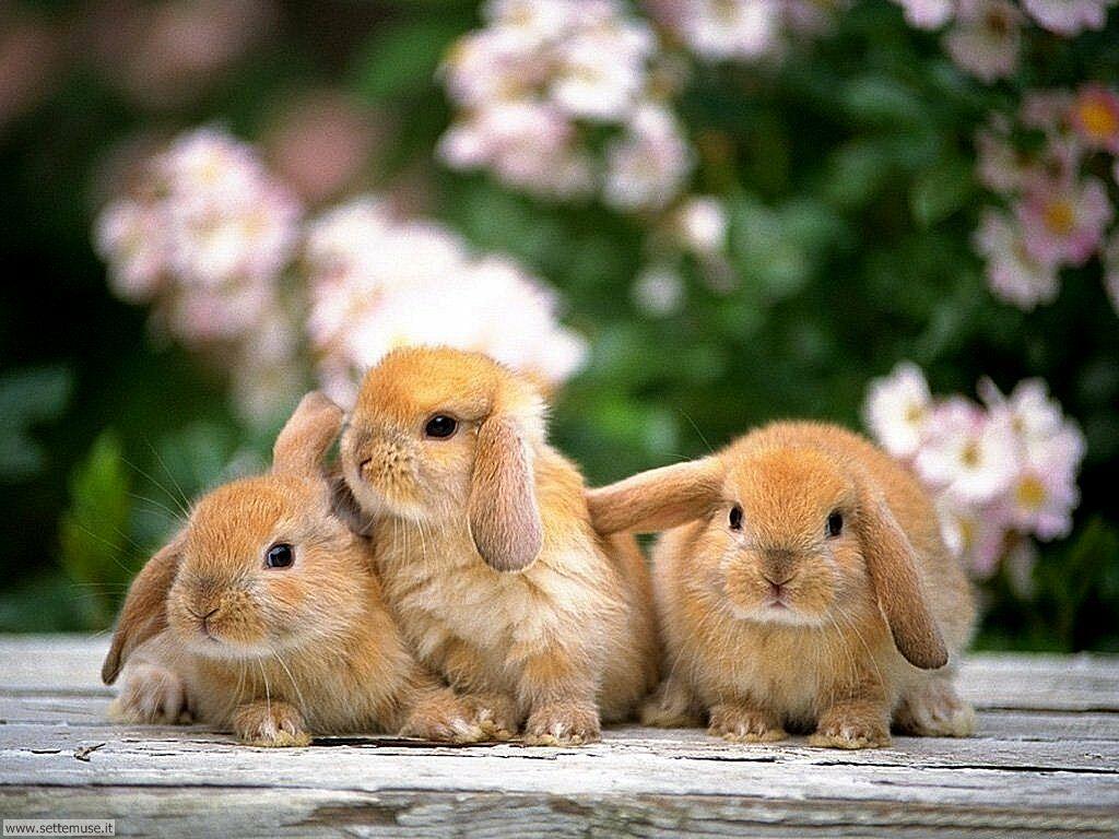 Coniglietti sani o malati