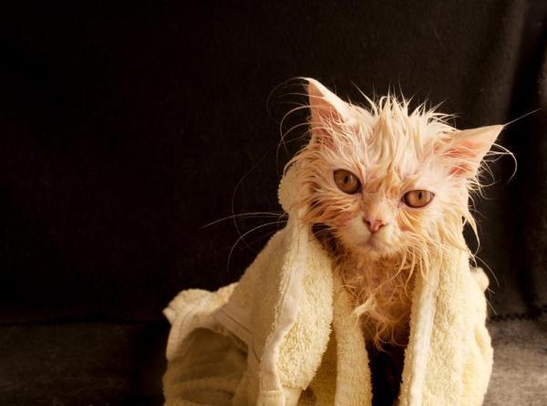 Quando iniziare a fare il bagno a un gatto