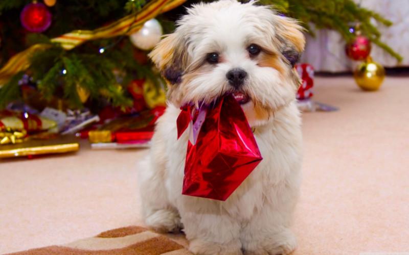 -Idee regali di Natale per il mio cane