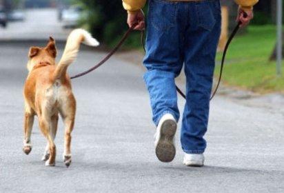 Come insegnare al mio cane a camminare senza tirare