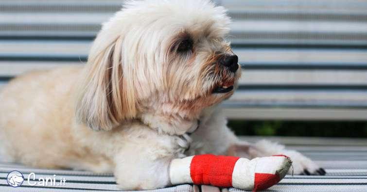 Come curare una ferita a un cane