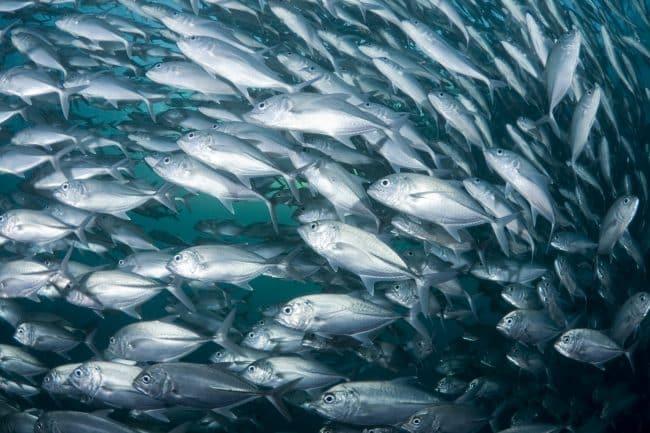 Allevamenti ittici