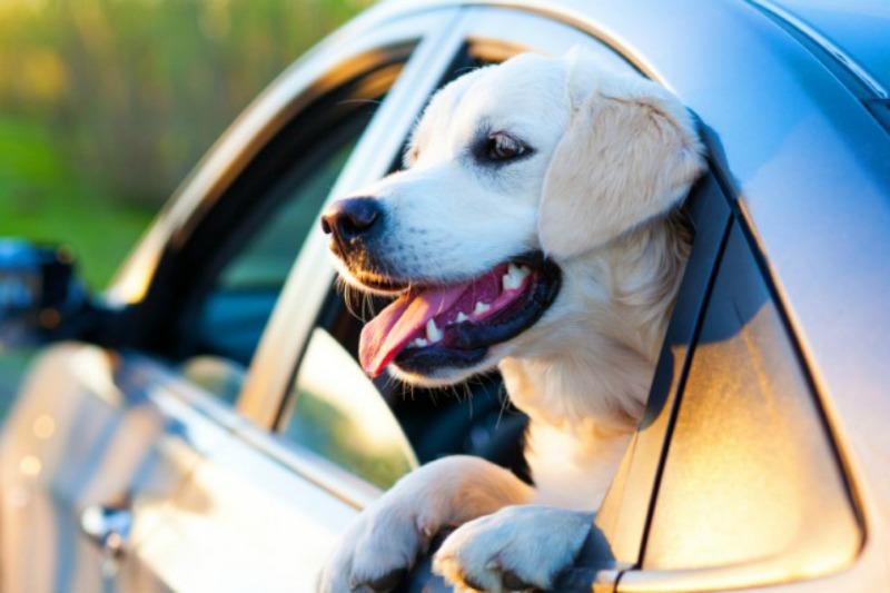 Come viaggiare con il mio cane in auto