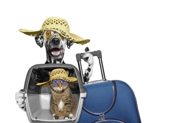 Viaggiare con gatti e cani