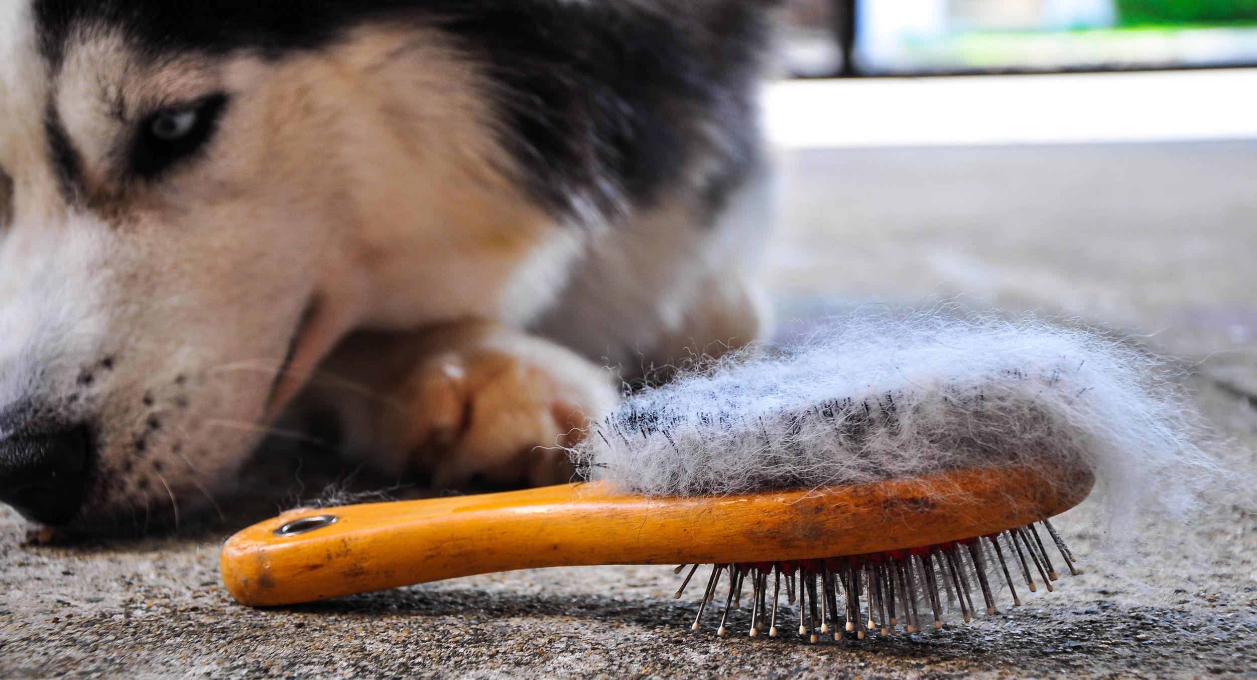Come rimuovere i peli dei cani