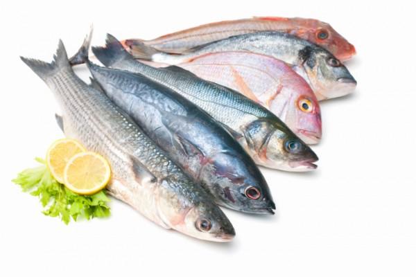 Le principali specie ittiche