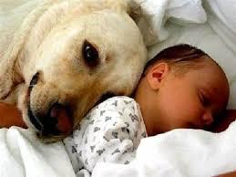 come scegliere un animale per il proprio figlio