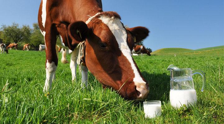 Il latte e la normativa