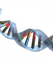 Il gene architetto del cervello