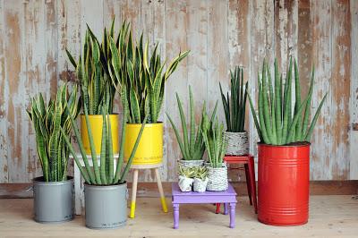 Le piante che crescono meglio in casa