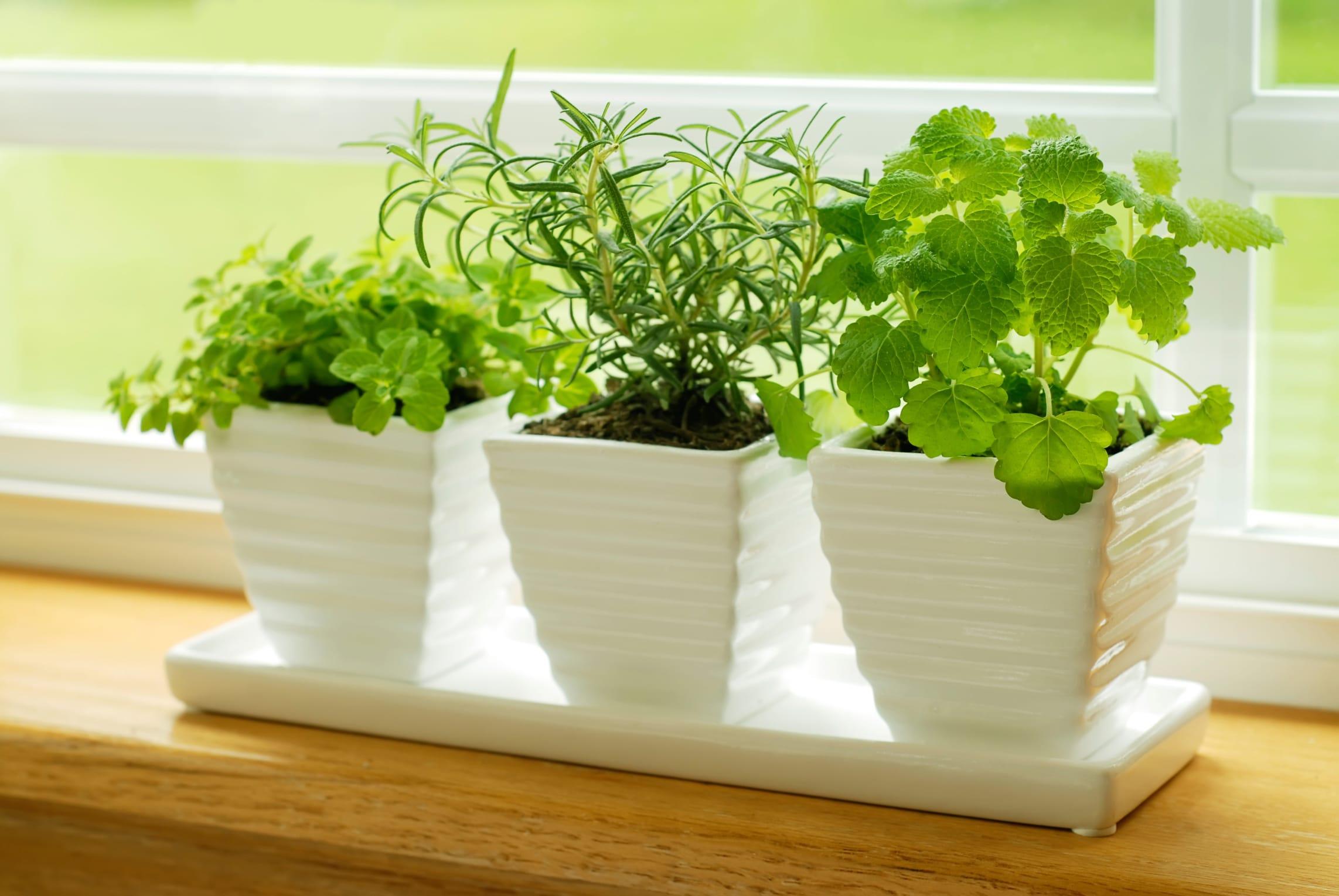 Come piantare piante aromatiche a casa