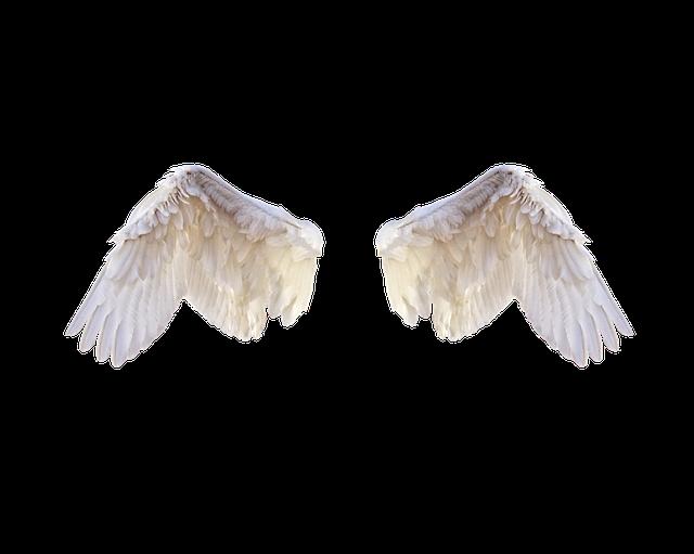 Vorrei le ali