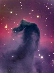 """""""Un cavallo tra le stelle"""" di Mary Stewart"""