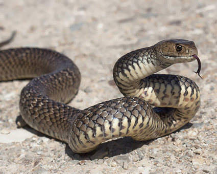 Significato del serpente come animale potere