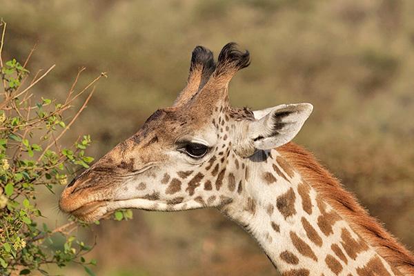 Le meraviglie della Tanzania