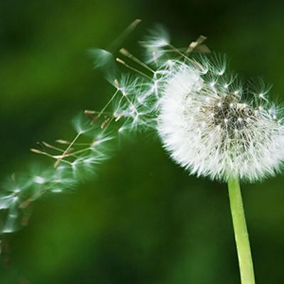 Allergie: in questa strana primavera affrontiamole light