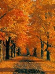 Malinconia d'autunno