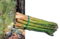 L' asparago