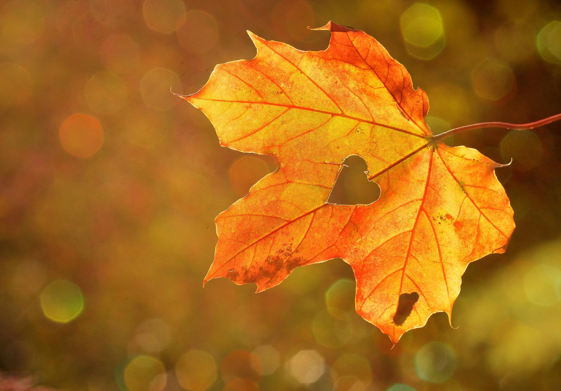 3 validi motivi per amare l'autunno