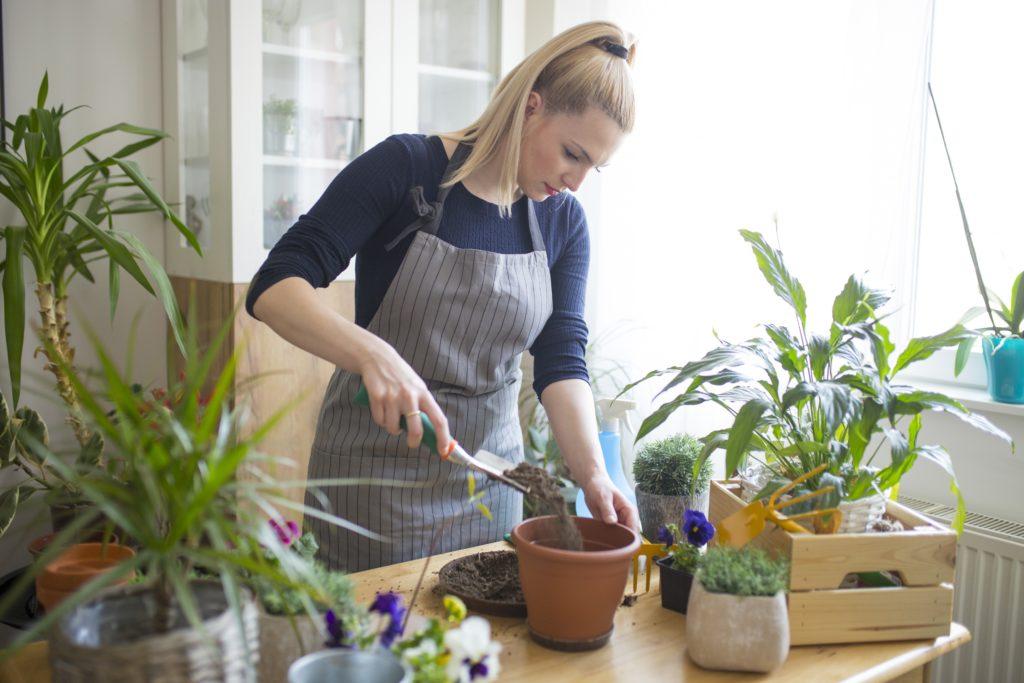 Cura delle piante da interni