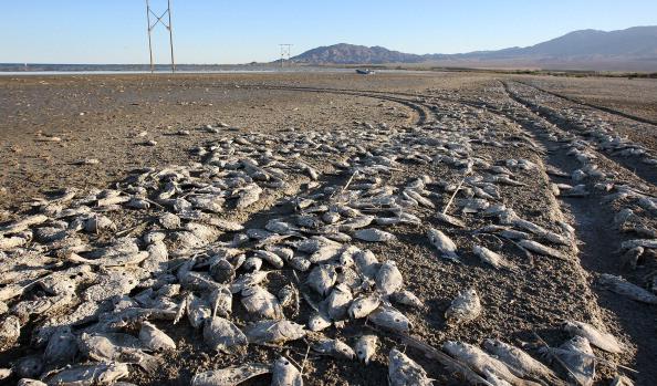 Welcome to Salton: il lago della morte