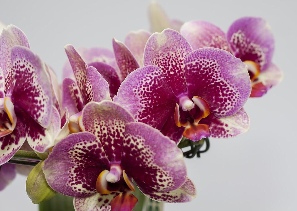 Perché i miei fiori cadono dalla mia orchidea
