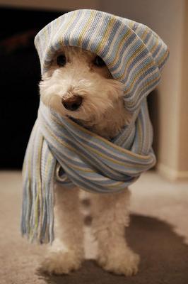Modi di dire: da dove arriva l'espressione ,,fa un freddo cane,,?!
