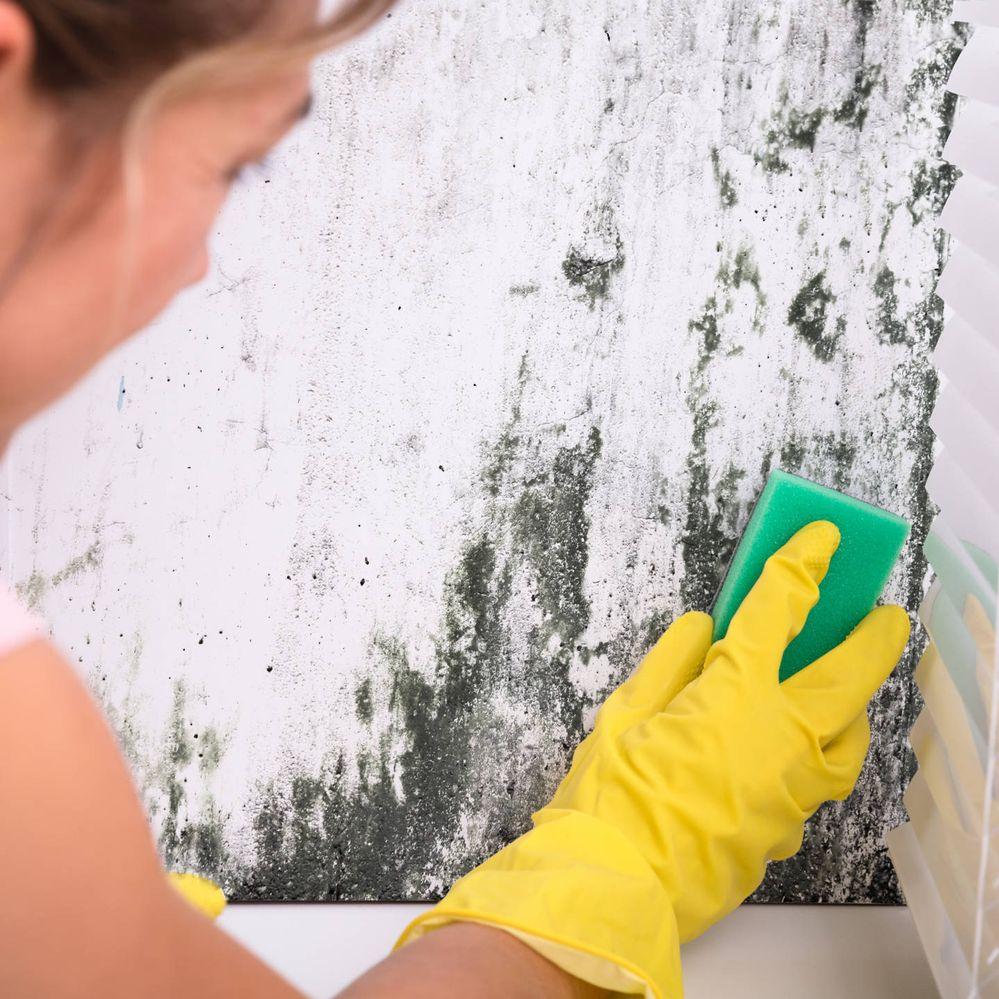 Come rimuovere la muffa dai muri
